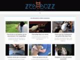 Vidéos animaux : drôles, émouvantes, tristes et même choquantes...