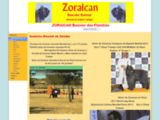 Zoraican - Bouvier des Flandres