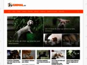 Animal.ch - conseils sur la santé des animaux
