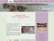 Chatterie des jardins persans et éxotic shorthair