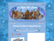 Chatterie somali La Magie des Licornes