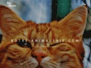 Notre animalerie en ligne