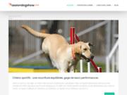 Passiondogshow : le blog des chiens