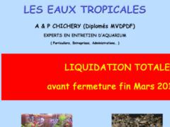 Les Eaux Tropicales