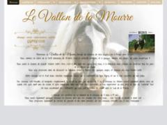 Elevage de chevaux Gypsy Cob