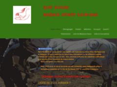 Massage sportif équin