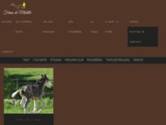 Elevage de chevaux paint horse