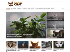 Détails : Le bien-être et la santé de votre chat