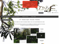 Aquatic Mosses & Ferns