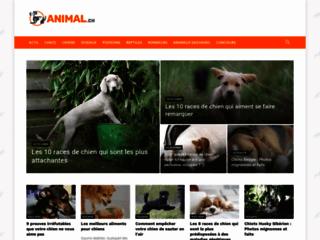 Détails : La plateforme informative sur les animaux de compagnie