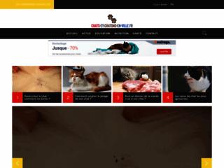Informations et actualités sur les chats