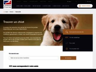 Détails : Chien à vendre - www.chiens-online.com