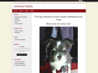 Chihuahua massilia