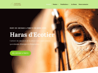 Détails : Elevage Chevaux et Poneys  - Haras d'Ecotier