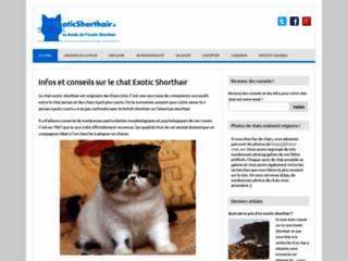 Guide du chat Exotic Shorthair