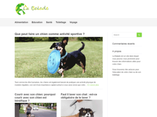 Blog canin pour les amoureux des chiens