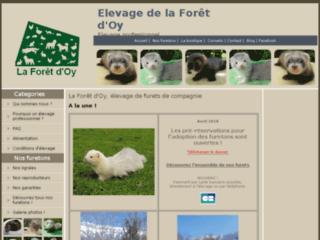 La Forêt d'Oy