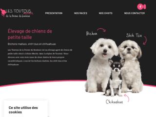 Détails : Elebage des chiens de petite taille