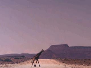 NewAfrica, blog sur le développement de l'Afrique