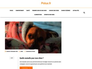 Astuces pour l'entretien des chiens