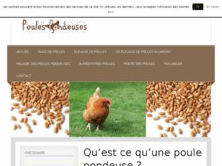 Détails : Tout sur les poules pondeuses !