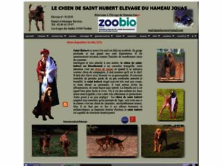 Le chien de Saint Hubert  élevage et promotion pour la chasse et l'utilisation comme chien de recherche en Gendarmerie