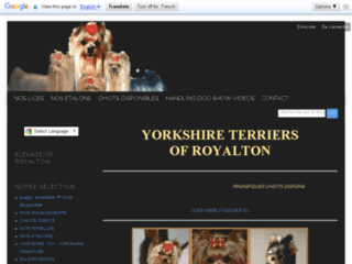 Royalton Yorkshire Terriers