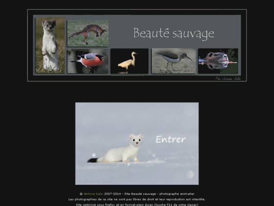 Beauté sauvage - photographie animalière