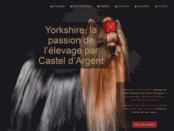 Yorkshire du Castel d'argent - Eleveur de yorkshire terrier - Vente de chiots