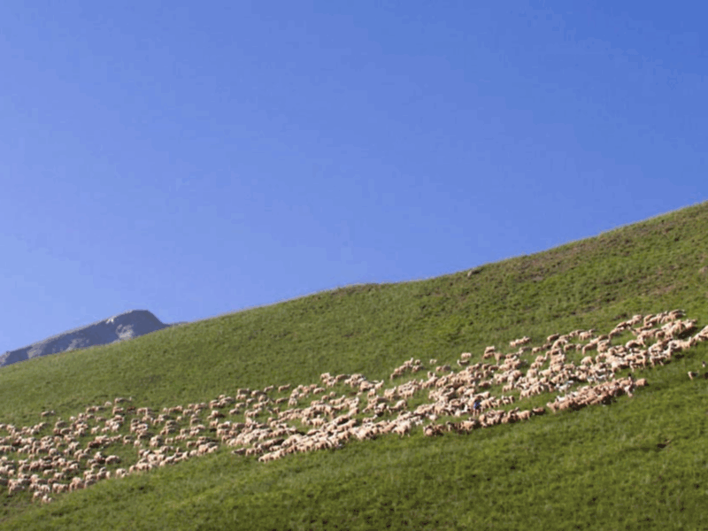 Camping alpes provence