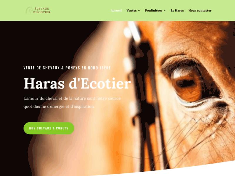 Elevage Chevaux et Poneys  - Haras d'Ecotier